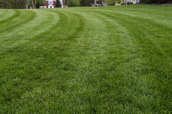 Lawn mowed by It's Just Grass in Forest Hill, MD with stripes.
