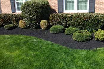Black mulch installed for homeowner in Bel Air, MD.