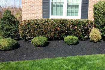 Newly trimmed bushes in a landscaping bed in front of a home in Bel Air, MD.