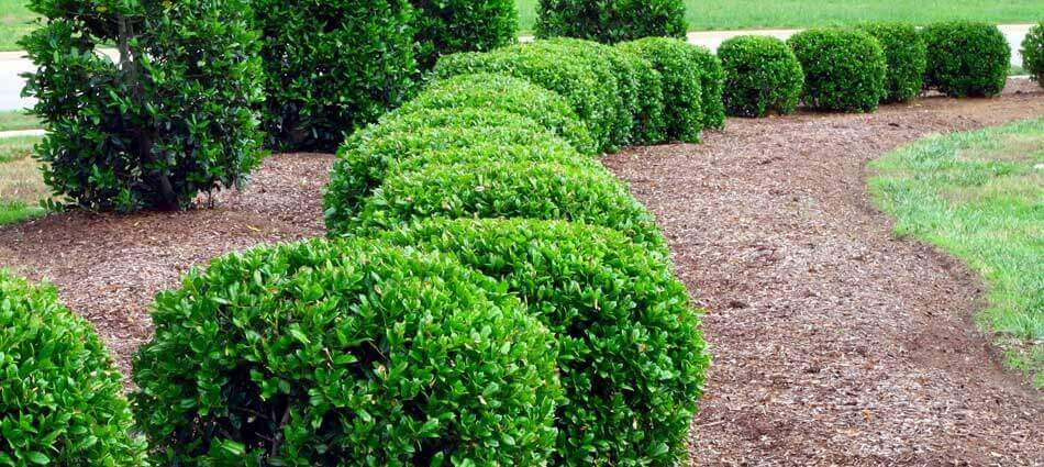 Bushes at home in Forest Hill, MD trimmed by It's Just Grass.